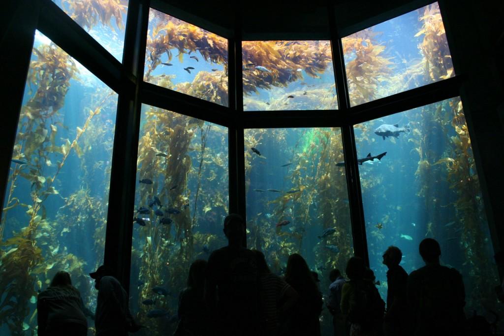 Ein Blick auf das Tangwaldaquarium (Foto: Christian Hinze)